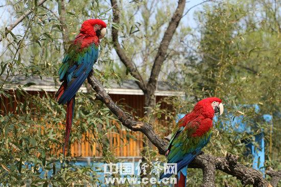 资料图:鹦鹉- 摄影 经济日报-中国经济网记者- 韩璐.jpg