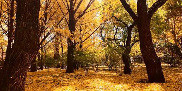 秋季移动图.jpg